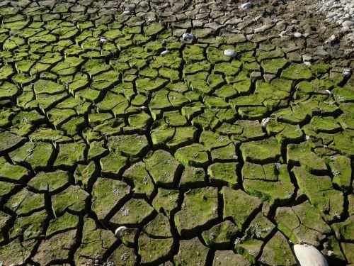 folsom & nbsp, ežeras, Kalifornija, sausra, purvas, įtrūkimai, Folsom ežero sausra 84