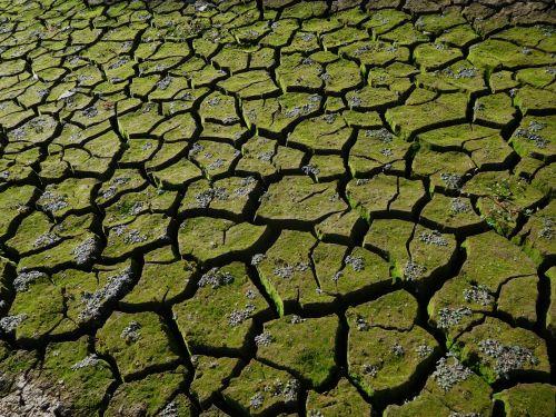 folsom & nbsp, ežeras, Kalifornija, sausra, vanduo, purvas, pyragas & nbsp, purvo, įtrūkimai, Folsom ežero sausra 89