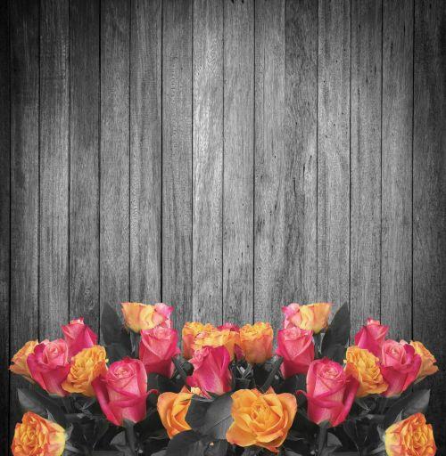fonas & nbsp, mediena, gėlės, rožės, juoda & nbsp, balta, senas & nbsp, medis, mediena, fonas, gėlė, fonas