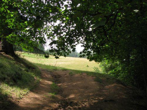 pėsčiųjų takas, pėsčiųjų takas, kelias, purvinas & nbsp, kelias, takas, miškas, gamta, pėsčiųjų takas