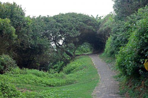 kelias, asfaltuotas, augmenija, žalias, tankus, pakrantės, pėsčiųjų takas su pakrančių augmenija