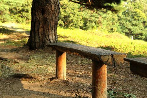 miškas,stendas,parkas,mediena,vaikščioti,medinis stendas,kraštovaizdis,šiluma