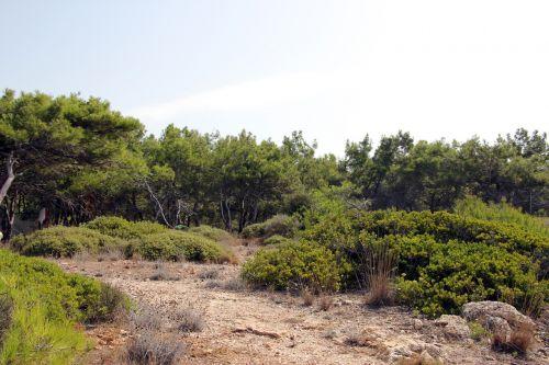miškas,gamta,kraštovaizdis,žalias,medis,natūralus,parkas,lauke,miško peizažas,vasara,gamtos fonai,aplinka,vaizdingas,peizažas,natūralus fonas