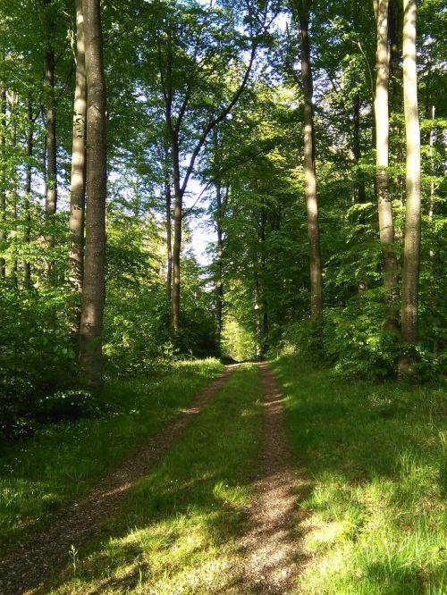 Miškas, Miško Takas, Natūralus, Eglės, Idilija, Nuotaika, Iškylai, Tyla, Ro, Denmark, Medžiai