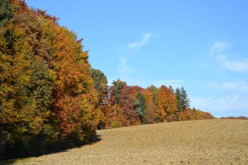 miškas,ruduo,ariamasis,medžiai