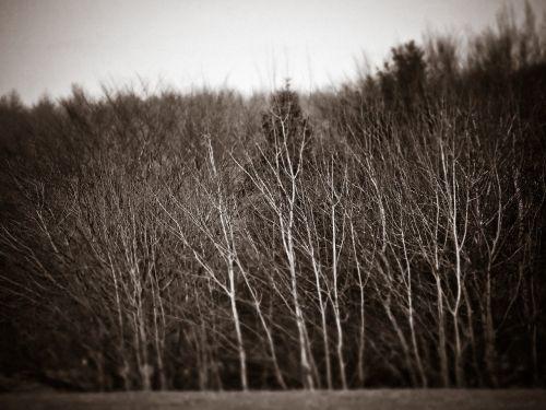 miškas,medžiai,gamta,kraštovaizdis,niūrus,keista,tamsi,juoda balta,kontrastas