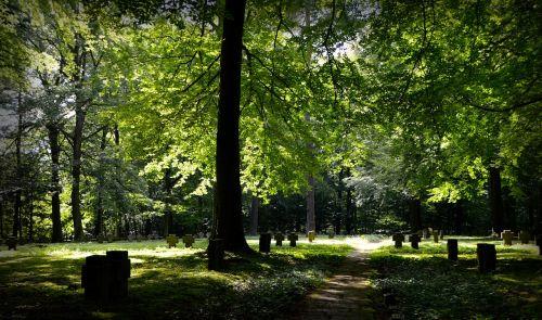 miškas,paminėti,atmintis,kryžiai,kapinės,paskutinis,kapas,gedulas,harmonija,malonumas,kapinės,weststadt,ilgesys