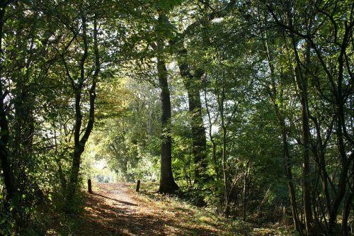 miškas,ruduo,saulė,saulės šviesa,gamta,medis,Spalio mėn,natūralus,peizažas,spalvinga,saulėtas,lauke,Ostfriesland,ihrhove