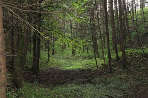 miškas,niūrus,medžiai