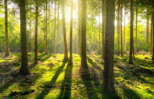 miškas,saulė,šešėlis,žalias,geltona,gamta,kraštovaizdis,šviesa,saulės šviesa,saulėtas,medis,lauke,saulės šviesa,šviesus,natūralus,parkas,scena,vaizdingas,peizažas,spinduliai,mediena,aplinka,kaimas,dienos šviesa,hdr