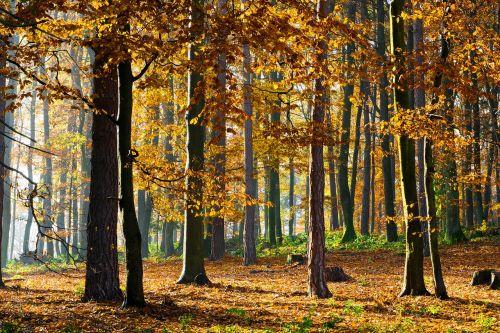 miškas,jesen,žalias,gamta,medžiai,Šalis,lapija,lapai,kalnai,filialas,mediena,parkas,geltona,spalvinga,žievė,ruduo