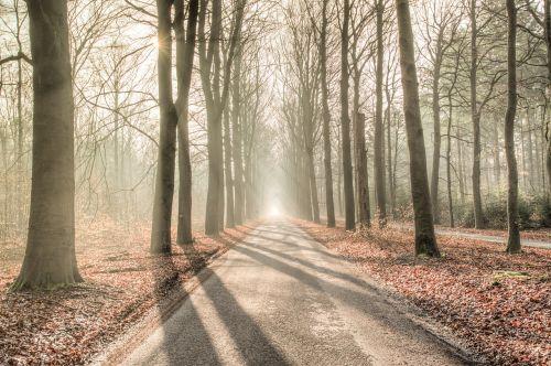miškas,saulė,šešėlis,žalias,geltona,gamta,kraštovaizdis,šviesa,saulės šviesa,saulėtas,medis,lauke,saulės šviesa,šviesus,natūralus,parkas,scena,vaizdingas,peizažas,spinduliai,mediena,aplinka,kaimas,dienos šviesa,hdr,kelias,rūkas,migla