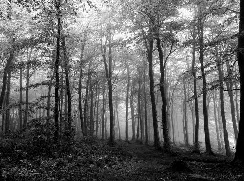 miškas,juoda,balta,baisu,medžiai,mediena,lapai