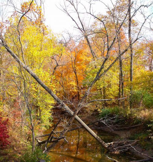 miškas,mirę medžiai,medžiai,žalias,vasara,vanduo