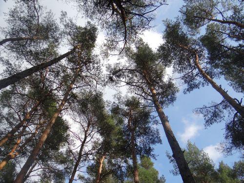 miškas,medis,gamta,filialų filialai,vasara,filialai,karūna,žalias,aplinka
