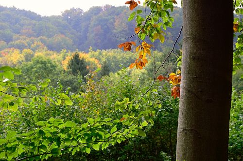 miškas,kritimo spalva,spalvoti lapai,rudens miškas,gamta,rudens spalvos,farbenspiel
