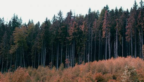 miškas,gamta,ruduo,medžiai,kraštovaizdis,pakraštyje,laukinis miškas,miške,rudens gamta,augalas,gyvoji gamta,kalnai
