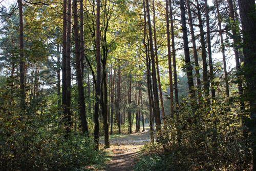 miškas,ruduo,saulė,kritimo spalvos,aukso ruduo,rudens lapai,dangus,rudens gamta,gamta,medis,rudens miškas,medžiai,gyvoji gamta,lapai,vaikščioti,kelias,rudens lapas,kraštovaizdis,pasakų miškas,takas,rudens spalvos,listopad,grožis