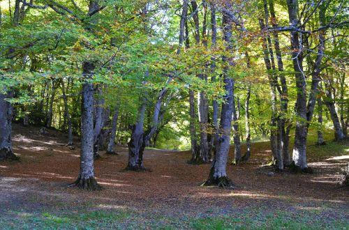 miškas,gamta,underwood,rudens miškai,medžiai,takas,miškai,žalias
