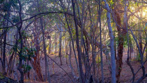 miškas,bushland,saulėtekis,townsville,miškas,australian outback