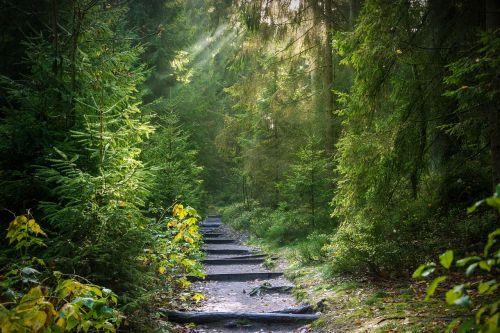 miškas,šviesos spindulys,saulė,saulės spindulys,šviesa,morgenstimmung,nuotaika,medžiai,misticizmas,apšvietimas,mistinis,saulės šviesa,šviesos spindulys,užtvindytas