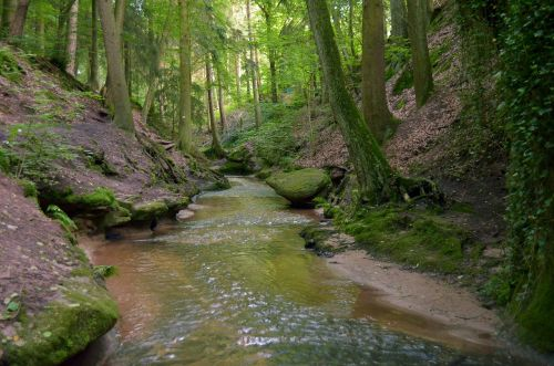 miškas,žalias,upelis,vanduo,Gorge,gamta,augmenija