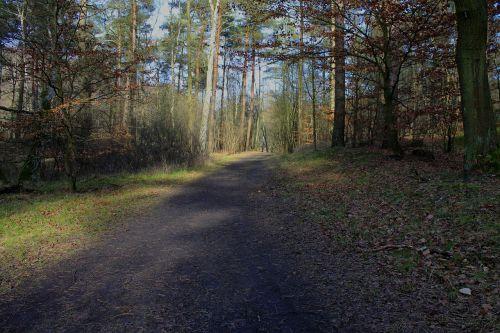 miškas,takas,medis,gamta,miško takas,žygis,migracijos kelias,žalias,kelias,žygiai,miško pakraštis,miško pakraščio takas