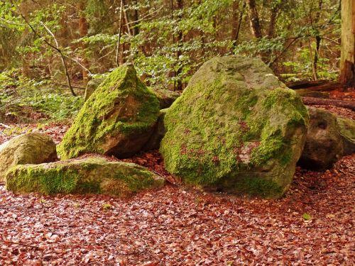 miškas,akmenys,gamta,bemoost