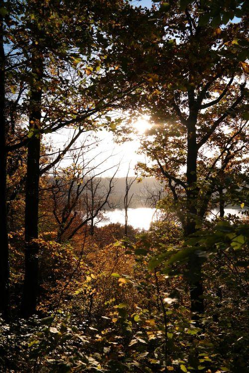 miškas,ruduo,saulė,atgal šviesa,medžiai,lapai,gamta,rudens miškas,nuotaika,filialai,saulės šviesa,farbenspiel