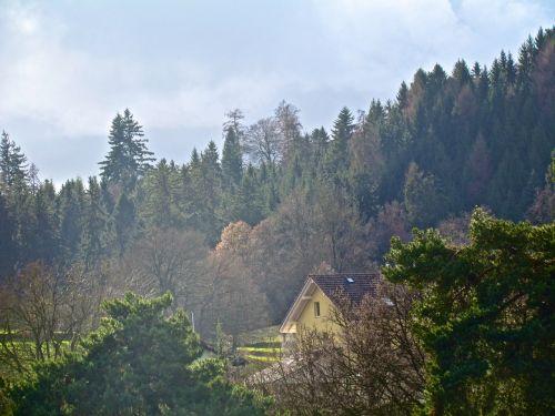 miškas,mistinis,ruduo