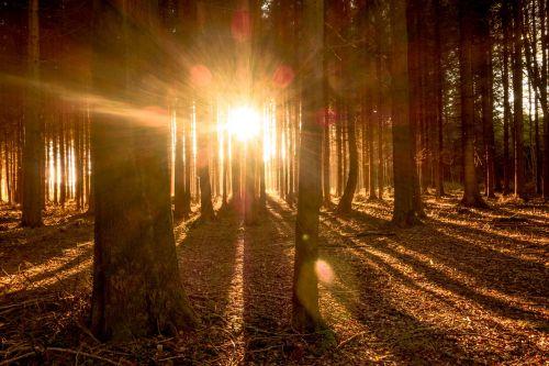 miškas,medžiai,šviesa,saulė,saulės spindulys,gamta,ruduo,kraštovaizdis,saulės šviesa,nuotaika,morgenstimmung,atgal šviesa