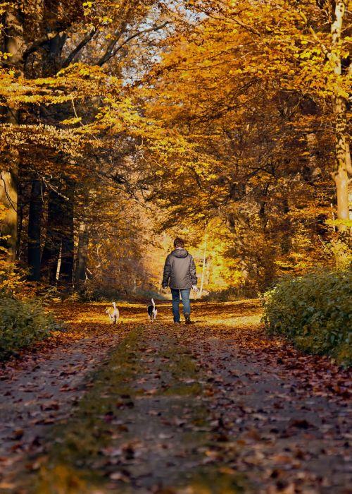 miško takas,ruduo,vaikštynės,šuo,kritimo lapai,nuotaika,kraštovaizdis,gamta,medžiai,miškas,kritimo spalva,miško takas,poilsis,atgal šviesa,idilija,rudens šviesa,kritimo lapija,žygiai,gamtos takas,takas,vaikščioti,juostos,Promenada,laisvalaikis,Asmeninis,gamtos rezervatas,pieva,toli