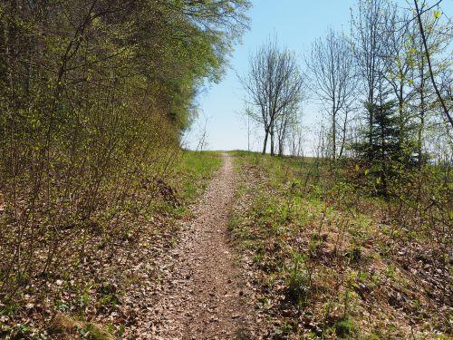 miško takas,pėsčiųjų takas,kelias,miškas,gamta,takas,žygiai,Lauterach,baden württemberg