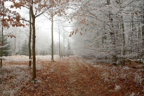 miško takas,žiema,miškas,toli,gamta,žiemą,takas,žygiai,šaltas,Promenada,balta,kelias,lapai,atmosfera,miško kelias,auskaras,ledinis,žiemos nuotrauka,kraštovaizdis,medžiai,prinokę,ledinis,ledo adatos