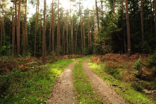 miško takas,kraštovaizdis,miškas,medžiai,gamta,takas,gamtos takas,purvo kelias,miškininkystė,vaizdingas
