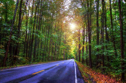 miškas, kelias, greitkelis, spalva, ruduo, medžiai, kritimas, hdr, miško kelias