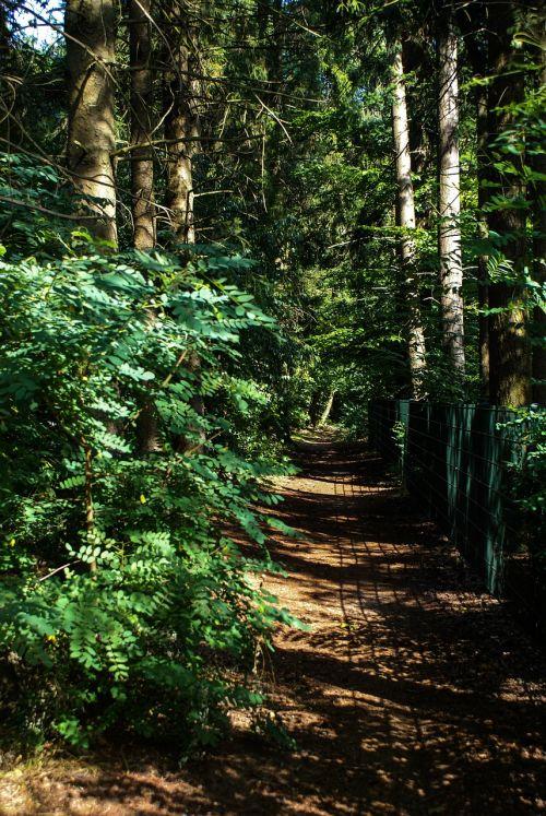 miškingas,miškas,tvora,buitenweg,kelias,gatvė,medžiai,parkas,žalias,kelias,pėsčiųjų takas,gamta,gyvenamoji aplinka,aplinka,kraštovaizdis