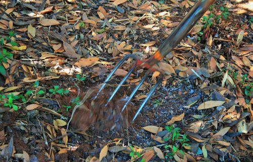 sodas, šakutė, dirvožemis, kasti, judėjimas, užkasamas dirvožemis
