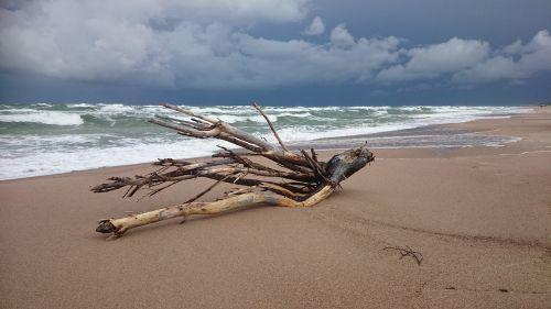 Persiųsti,papludimys,driftwood