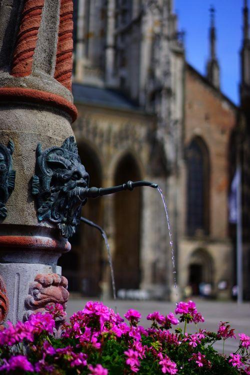 fontanas,vanduo,geranium,gėlės,spalvinga,spalva,rožinis,pelargoniai,pelargonium,geranium greenhouse,geraniaceae,münster fontanas,katedros aikštė,ulm,liūto fontanas,ulmi katedra,münsteris