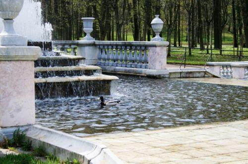 tvenkinys, vanduo, fontanas, laipsnis, antis, turėklai, fontano vandens tvenkinys, peterhof