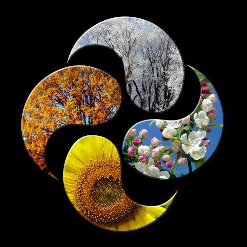 sezonai, sezonas, pavasaris, vasara, ruduo & nbsp, žiema, kritimas, keturi & nbsp, sezonai, medis, medžiai, žiedas, gėlės, saulėgrąžos, lapai, sniegas, koncepcija, konceptualus, Laisvas, viešasis & nbsp, domenas, keturi metų laikai