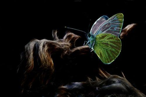fraktalius, žalia balta, drugelis, žalia vamzdis balta, drugeliai, vabzdys, gamta, gyvūnų pasaulis, mediena, filialas, sirrealis, be honoraro mokesčio