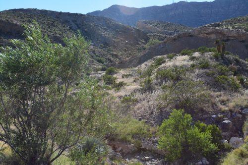 franklin, kalnai, valstybė, parkas, spalvinga, texas, nuotrauka, smėlis, kaktusas, yucca, augalas, dykuma, texas, parkas, takas, kelias, kelias, žalias, daugiametis, krūmai, medžiai, franklin kalnas texas valstybinis parkas