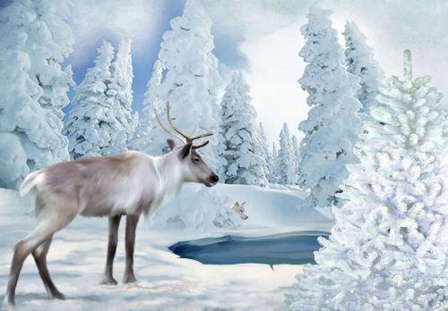 užšaldymo laikas,šiaurės elniai,vilkas,sniegas,žiema,ežeras,plėšrūnas,nuotaika,šaltis