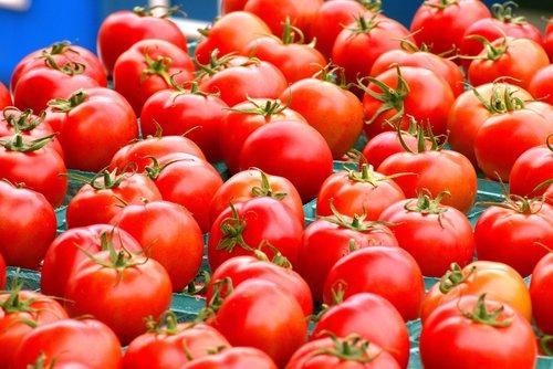 švieži nuskinti pomidorai, švieži pomidorai, pomidorai, daržovės, maisto, derlius, turgus, ūkininkų turgus, pomidorų, ūkis, žemės ūkio, šviežias, organinė, natūralus, rinkos šviežios daržovės, raudona, žalias, saldus, pasėlių, prinokę, žalias, sveiki, Sodas, augalų, sultingas