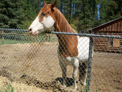 draugiškas,arklys,ranča