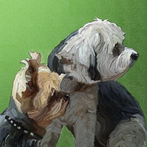 draugai,šunys,naminis gyvūnėlis,Geriausi draugai,galva,portretas,hibridas,gyvūnas
