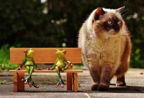 draugai,sėdėti,varlės,bankas,katė,įdomu,stendas,poilsis,pertrauka,juokinga,mielas,linksma,yra,dviems