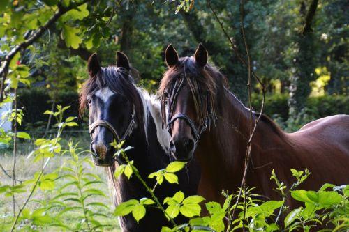 draugai,arklys,kartu